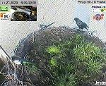 http://images42.fotosik.pl/144/ffa6f8356056b704m.jpg