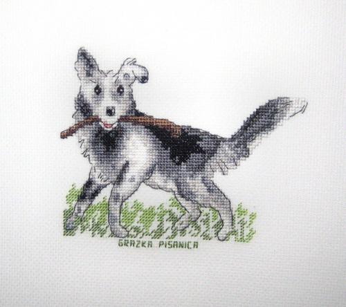 dla Tomusia (k. 891) #HaftKrzyżykowy #pies