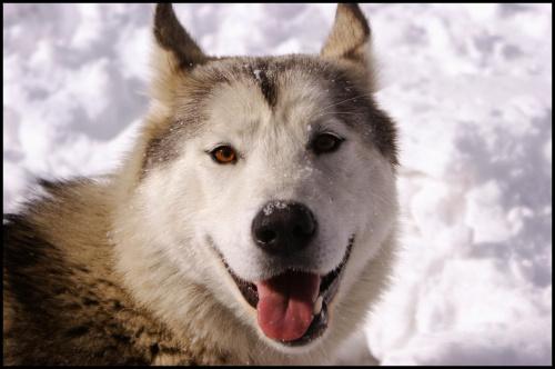 Uśmiech! #pies #zima #śnieg