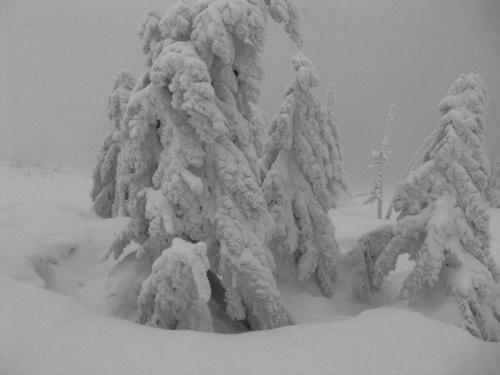 Śnieżne stwory_2 #Karkonosze #góry #zima #śnieg