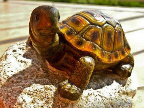Żółwiu
