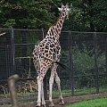 #zoo #zwierzęta #żyrafa