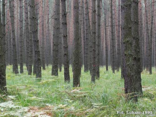 Las #las #grzyby #drzewa #zieleń