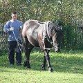 marzenia #koń #konie #wakacje #ksz #mylog #marchew #grzyby #grzybobranie #praca #zabawa