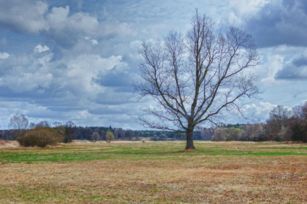 drzewo #drzewo #hdr