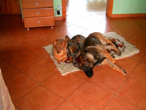 psia rodzinka w komplecie #komplet #pieski #PsiaRodzina #psy #rodzinka