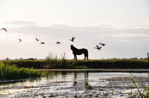 #koń #rzeka #widok #krajobraz