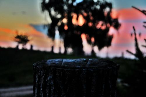 #drzewo #pień #kolory #ładne
