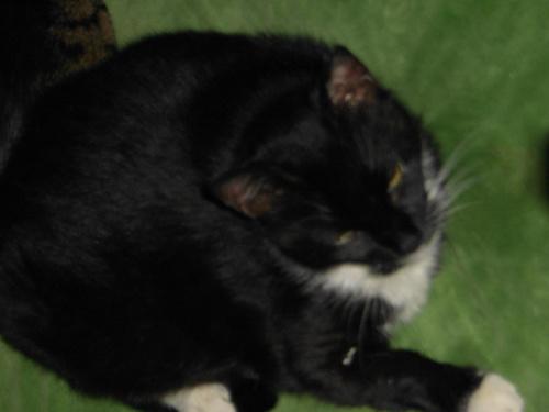 Majeczka (1 listopada 2008)