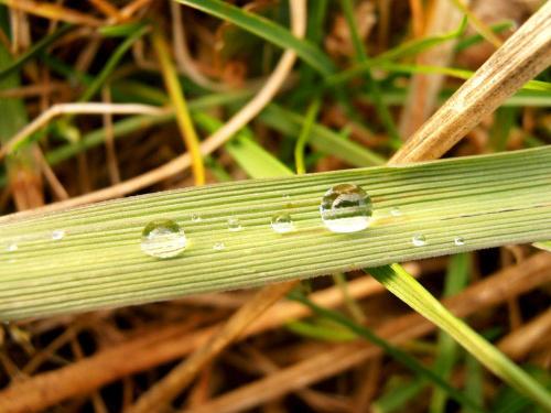 krople wody #woda #deszcz #trawa