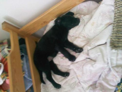 mała Kora u mnie w łóżku