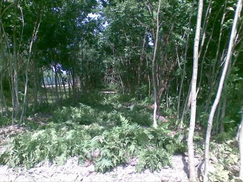 Szkółka leśna #Kolonia #leśna #leśne #mazowieckie #odnowienia #Pasztowa #podkładka #porolne #sadzonki #szkółka #viridis #Wola #zalesienia #zalesień
