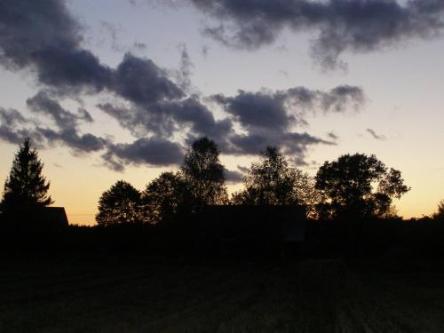 Drzewa #drzewa #cień #ZachódSłońca #słońce #zachód #chmury