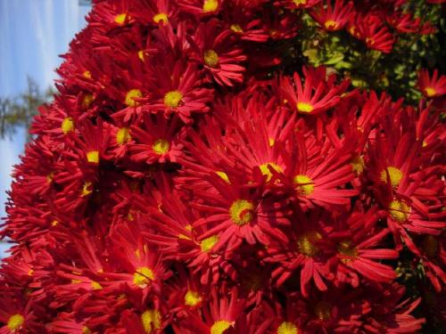 Dla Jagger63 z okazji urodzin:) Zdrowia,szczęścia,100lat!!! #kwiaty #natura