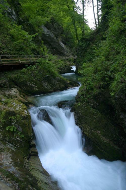 Malownicze widoki w wąwozie Vintagr. Rzeka, wodospady, progi rzeczne i niezwykle czysta woda... #Słowenia #Vintagr #woda #las