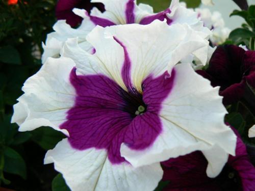 #kwiatek #natura #ogród