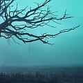 drzewo we mgle #drzewo #krajobraz #mgła #mrocznie #ranek #sceneria