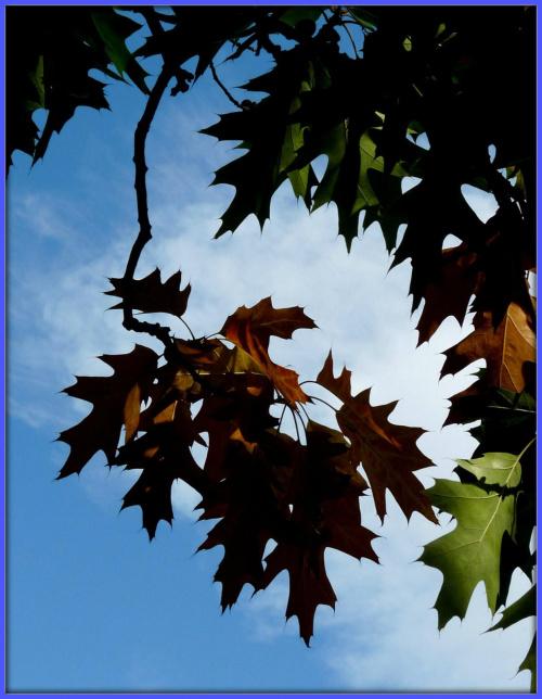 jesien #jesien #liscie #łąka #pole
