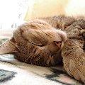 sen #kot #zwierze #sen #odpoczynek