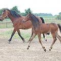 #Arkadia #Boy #klacz #Probus #ślązaki #konie #stadnina #Truskawka #Tuzera #WielkaLipa