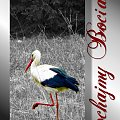 Kochajmy Bociany #miłość #bocian #bociany #ochrona #ptaki #żaba