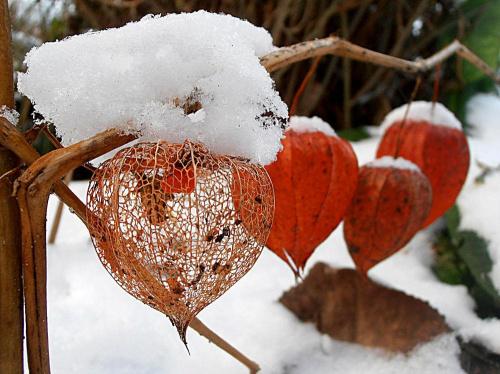Biel i czerwień. #zima #śnieg #mróz #szron #lód