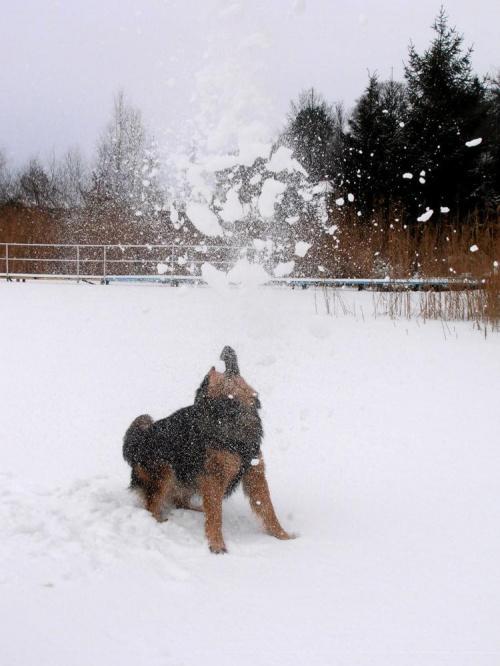 Zimowe harce z psem. #zima #pies #śnieg #lód #jezioro