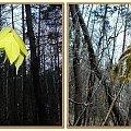 Z lampą i bez - jeżeli nie stanowi różnicy to po co.... #liść #las #inaczej