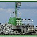 Stałe miejsce kormoranów na falochronie w Górkach Zachodnich #namalowane #obrazy #kormorany #NadMorzem #GdańskGórkiZachodnie #falochron