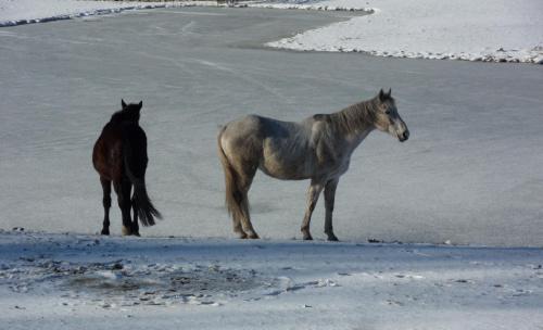 Czy ktoś poślizga się ze mną na stawie ? :)) #konie #lód #staw #zima