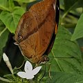 Dla wszystkich ktorzy lubia motyle...:) #evasaltarski #motyl #owad