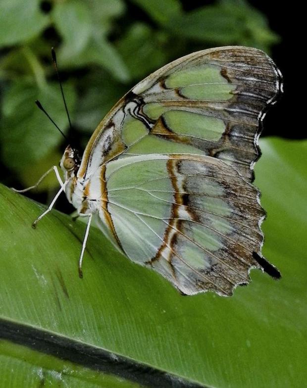 ten bardzo mi sie podoba, moze i Wam sie spodoba:) #evasaltarski #makro #motyl #owad