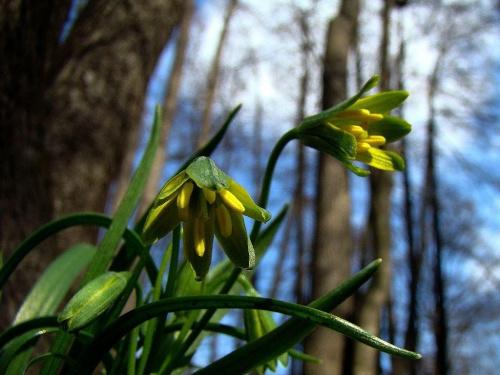 drzewa nas nie zasłonią bo jeszcze spią #Wrocław #wiosna