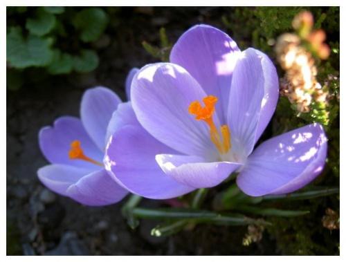 Wiosna nadeszła............. #wiosna