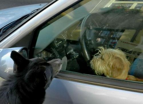 Polizać przez szybę #pies