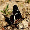 #motyl #przyroda #makro